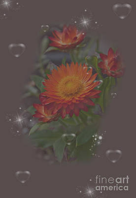 Photograph - Soft Pastel Abstract Strawflowers Art Prints by Valerie Garner