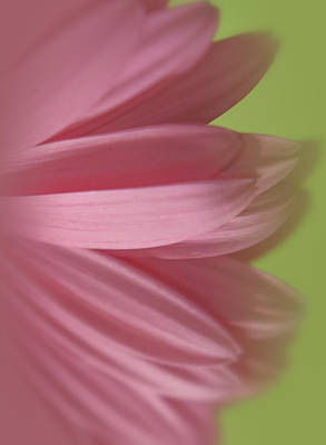 Photograph - Soft Petals by Kim Swanson