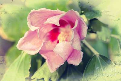 Photograph - Soft Pink by Audreen Gieger