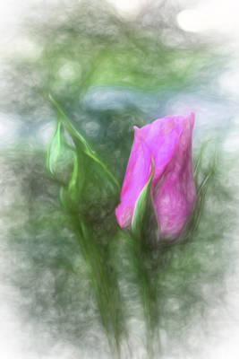 Digital Art - Soft Pink Bud by Terry Cork