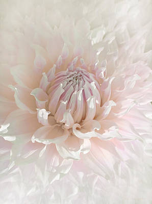 Photograph - Soft Pink Dahlia Flower by Jennie Marie Schell