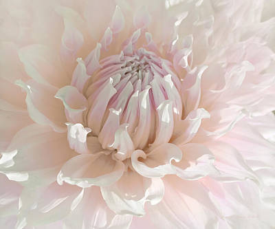 Photograph - Soft Pink Dahlia Flower Macro by Jennie Marie Schell