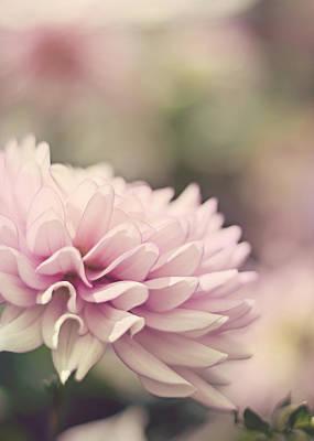 Minimal Photograph - Soft Pink Dahlia by Heather Applegate