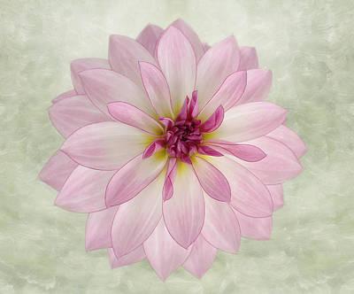 Photograph - Soft Pink Dahlia by Kim Hojnacki