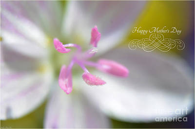 Photograph - Soft Pink Floral Mother's Day II by Debbie Portwood