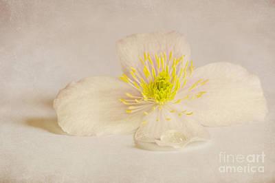 Soft Pink Flower Art Print by Svetlana Sewell