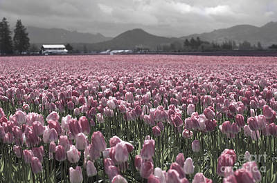 Photograph - Soft Pink Tulips by Louise Magno