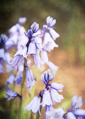 Duke Gardens Photograph - Soft Purple by Emily Kay