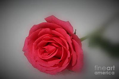 Soft Red Rose Art Print by Yumi Johnson