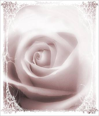 Frizzell Photograph - Soft Rose by Michelle Frizzell-Thompson