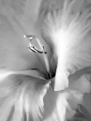 Soft Silver Gladiola Floral Art Print by Jennie Marie Schell