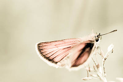 Skipper Photograph - Soft Skipper by Shane Holsclaw