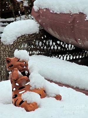 Photograph - Soft Snow And A Kitty by Phyllis Kaltenbach