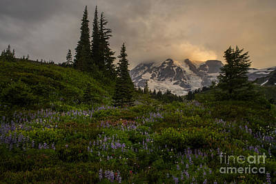 Spring Photograph - Soft Spoken Rainier Meadows by Mike Reid