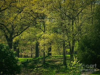 Photograph - Soft Spring Light by William OBrien