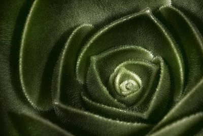 Geometric Photograph - Soft Succulent by Susan Candelario