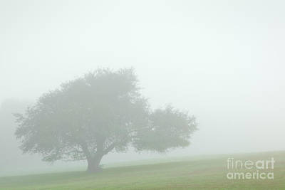 Photograph - Soft Summer Morning by Alan L Graham