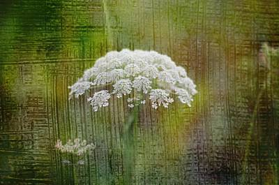 Soft Summer Rain And Queen Annes Lace Art Print by Suzanne Powers