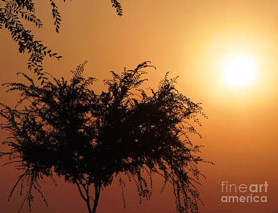 Photograph - Soft Sunrise by Meghan at FireBonnet Art
