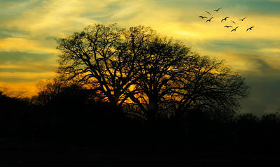 Soft Sunset Art Print by Joan Bertucci