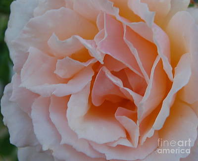 Photograph - Soft by Tamyra Crossley