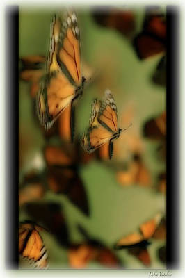 Photograph - Soft Touch 10  Wings by Debra     Vatalaro