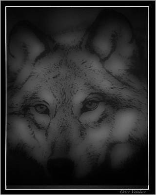 Photograph - Soft Touch 3 Design Wolf by Debra     Vatalaro
