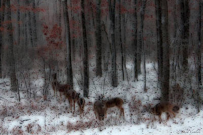 Photograph - Soft Touch 7 Winter Deer Family by Debra     Vatalaro