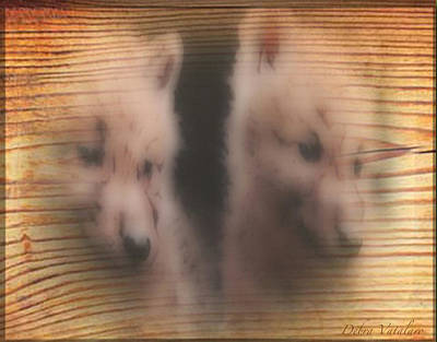 Photograph - Soft Touch Design Wolf Pups by Debra     Vatalaro
