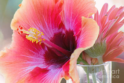 Photograph - Soft Touch Hibiscus by Sally Simon