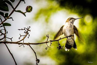 Photograph - Hummingbird - Soft Touchdown by Barry Jones