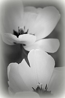 Photograph - Soft Tulips II by Kathy Sampson