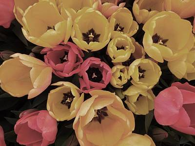 Wall Art - Photograph - Soft Tulips by Jackie and Noel Parry