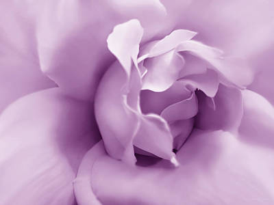 Photograph - Soft Violet Rose Flower by Jennie Marie Schell