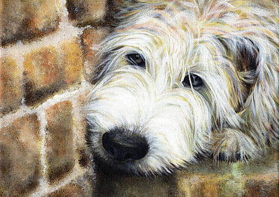 Painting - Soft Wheaten Terrier by Natasha Denger