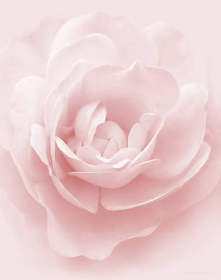 Photograph - Soft Whispers Pink Rose Flower by Jennie Marie Schell