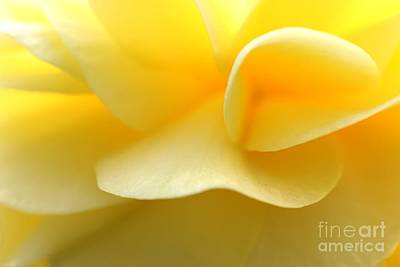 Photograph - Soft Yellow by Tap On Photo