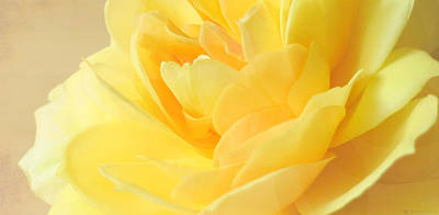 Photograph - Soft Yellow Rose by Deborah Smith