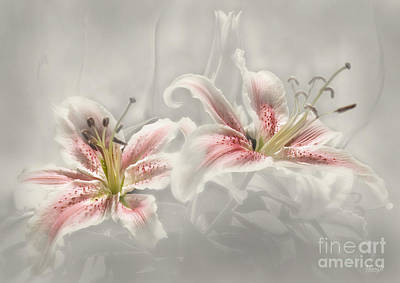 Digital Art - Soften Lilies by Johnny Hildingsson
