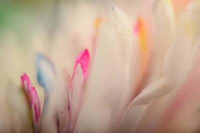 Photograph - Softly by Ann Bridges