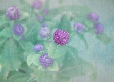 Garden Flowers Photograph - Softly Clover by Kim Hojnacki