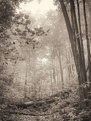 Photograph - Softly Comes The Morning-silvercreek Woods by Alan Norsworthy