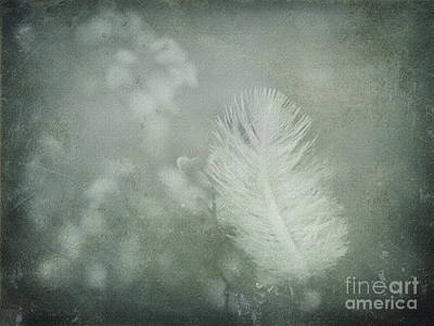 Photograph - Softly by Liz  Alderdice