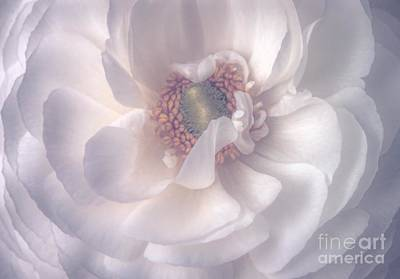 Photograph - Softly by Peggy Hughes
