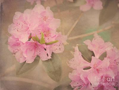 Softly Pink Art Print by Arlene Carmel