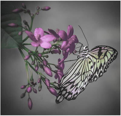 Digital Art - Softly Reflected On A Wing by Jill Balsam