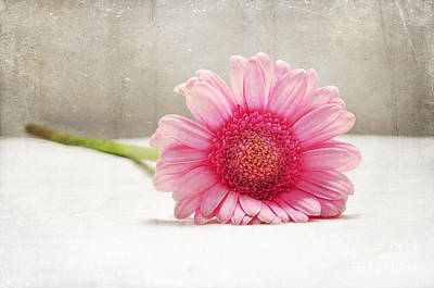 Photograph - Softness In Pink by Randi Grace Nilsberg