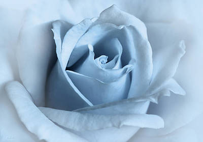 Rose Portrait Photograph - Softness Of A Blue Rose Flower by Jennie Marie Schell