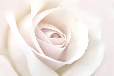 Photograph - Softness Of A Pastel Rose Flower by Jennie Marie Schell