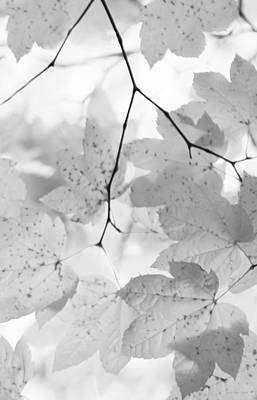 Photograph - Softness Of Maple Leaves Monochrome by Jennie Marie Schell